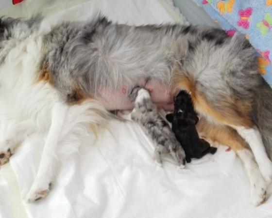 Nest 2 – Lotus & Prada – geboorte
