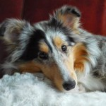 Zenith Blue From Marmorea's Shelter – Angie