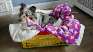 Even kijken of de pups straks wel lekker warm liggen