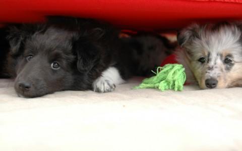 Pup verwachting…