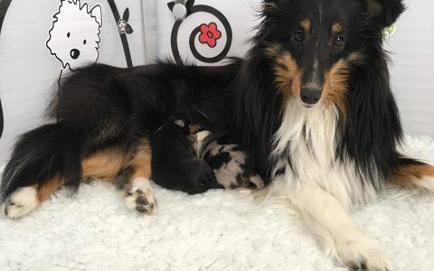 Twee pups van Noira en Dalton geboren